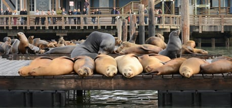sea-lions-watch-dogs-powerup