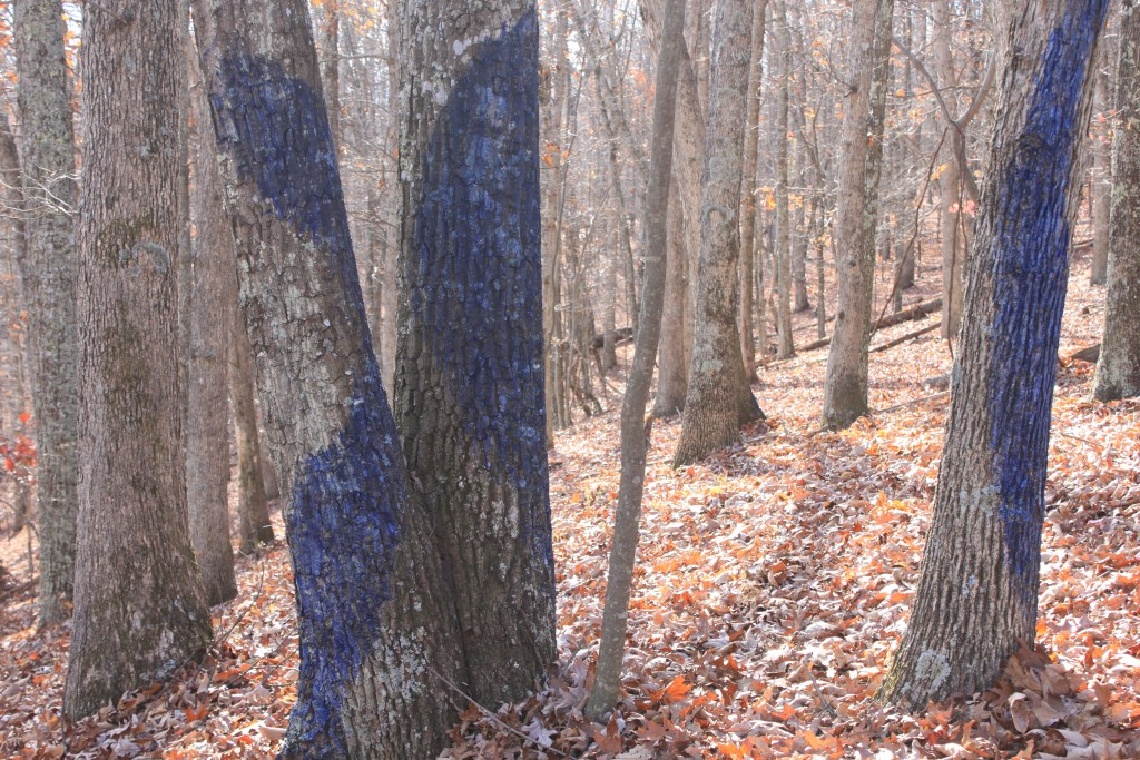 Part of the Blued Trees Symphony in Montgomery County, VA submitted by Robin Scully