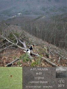 Clear cut for Mountain Valley Pipeline