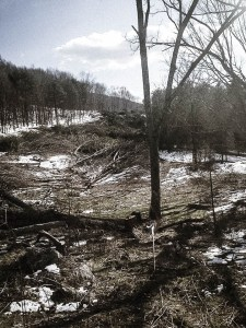 Clear cut trees for fracked gas pipeline.