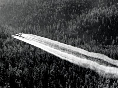 ddt samolot