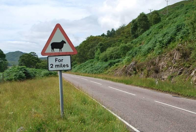 Дорожные знаки, предупреждающие об овцах-пешеходах.