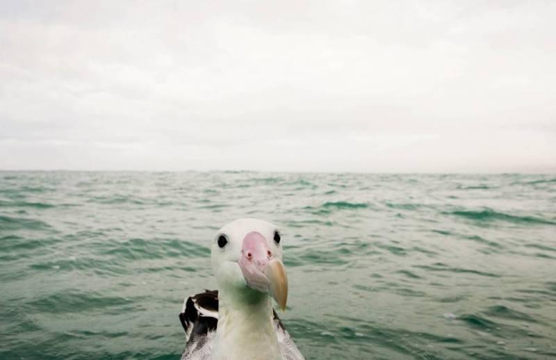 «Если кто спросит — вы меня не видели». (Фото William Richardson Comedy Wildlife Photography Awards)