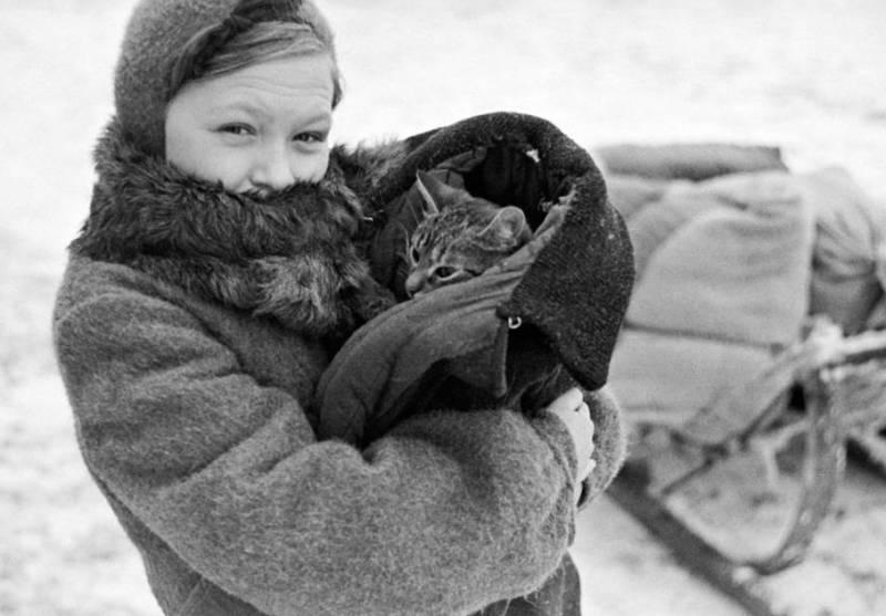 Кошки Вторая мировая война