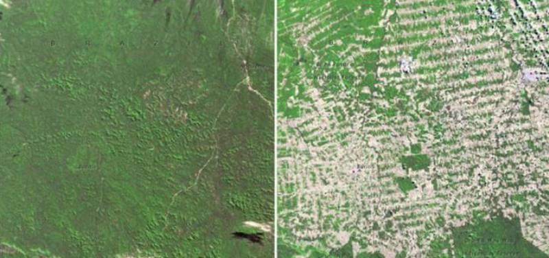 Бразилия лес