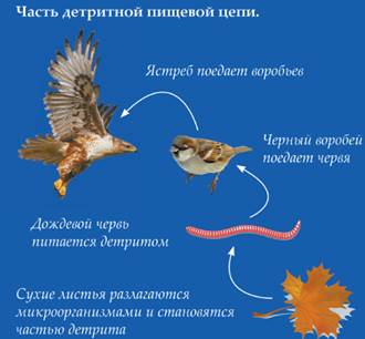 Птицы в пищевых цепях занимают место