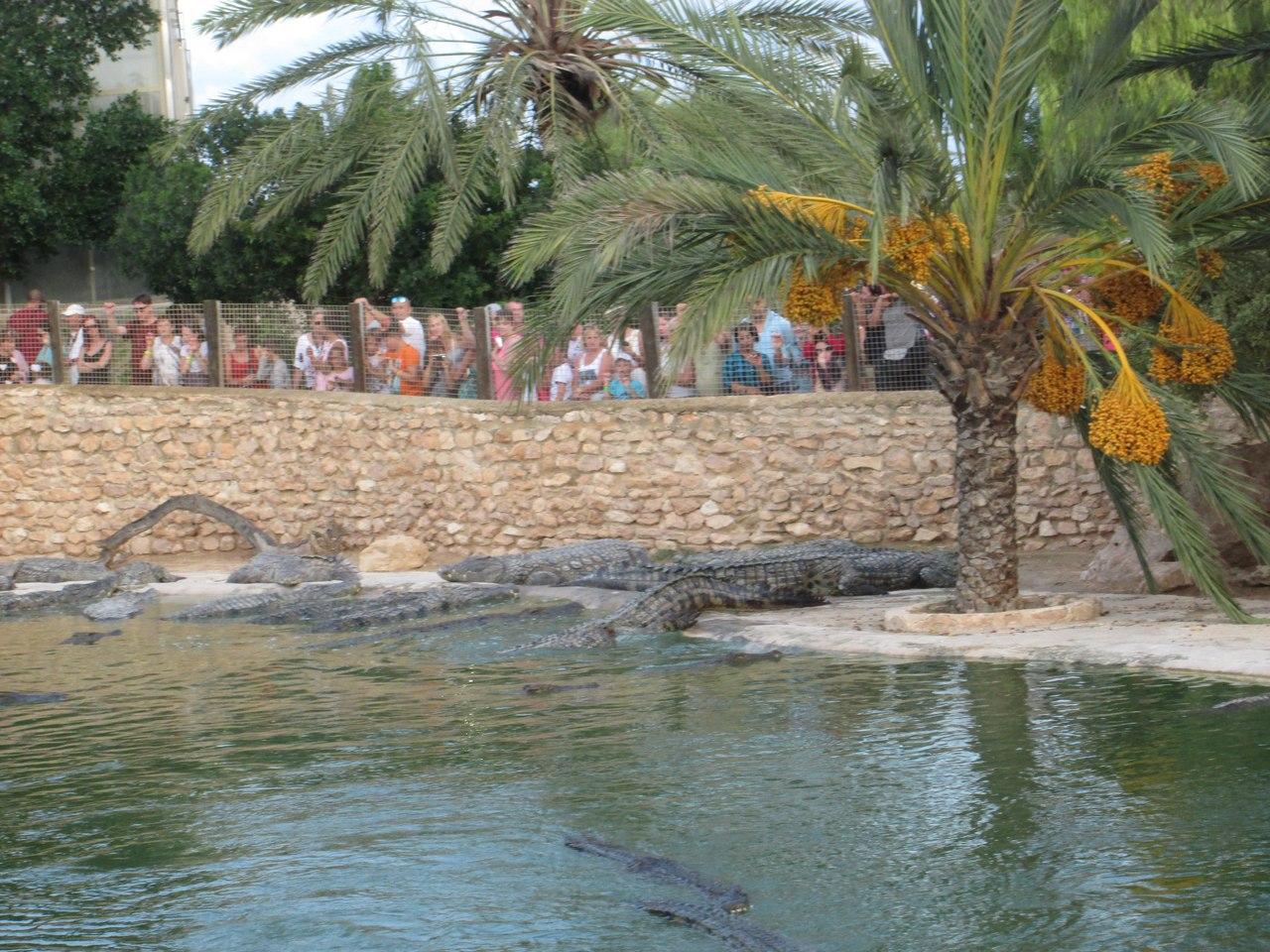 Тунис. Крокодиловая ферма