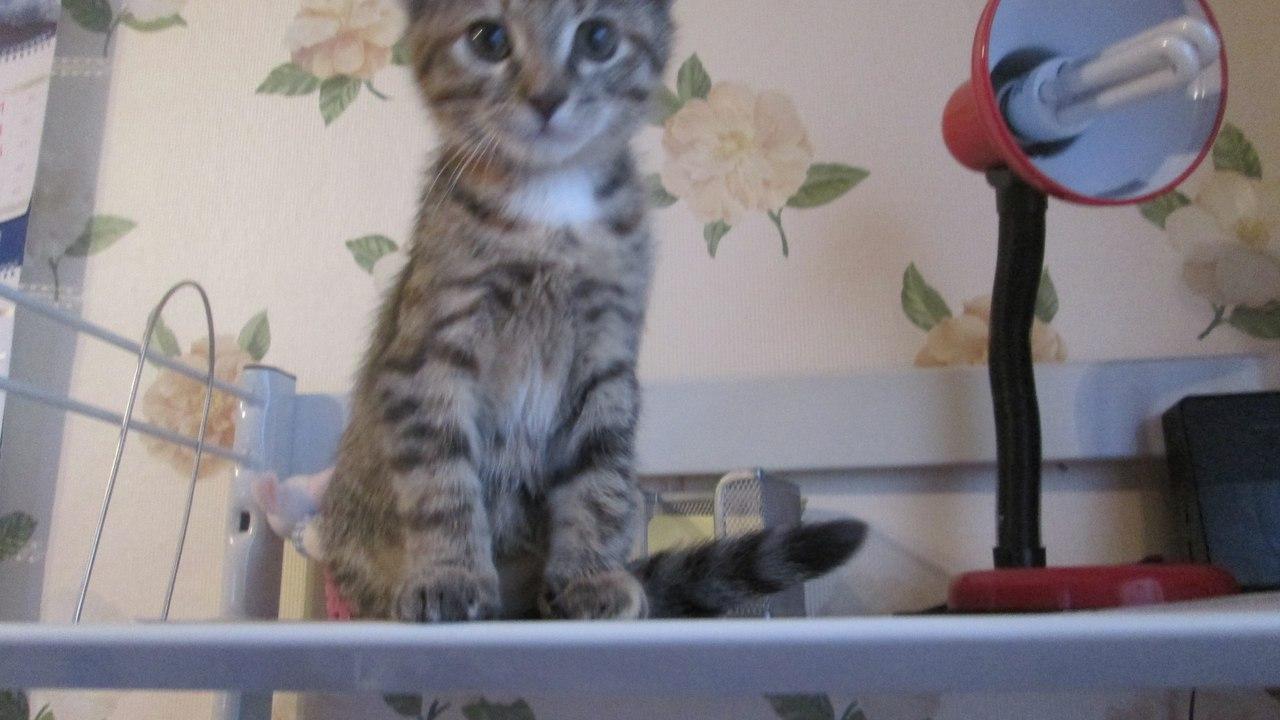 Кошке 2 месяца