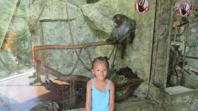 Зоопарк в парке Ривьера в Сочи