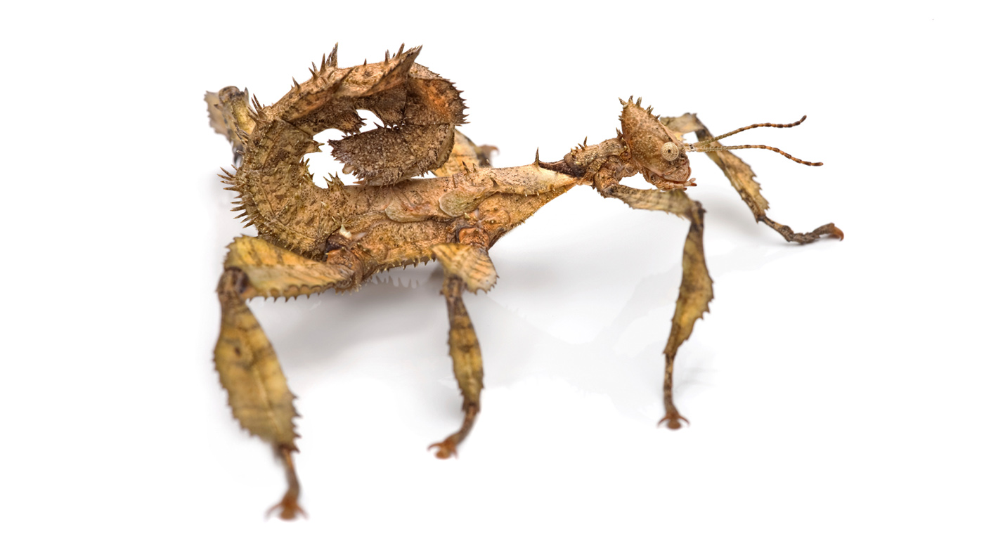 Top 10 Weirdest Looking Insects