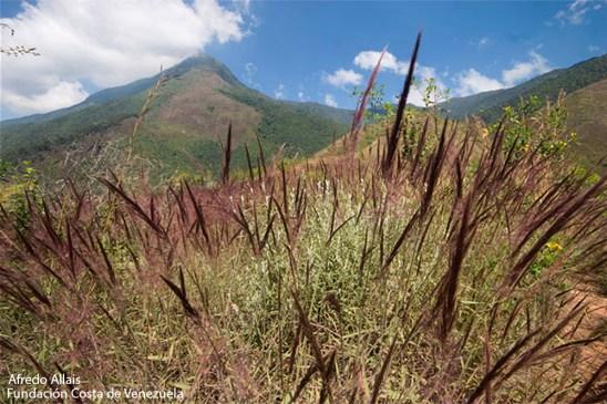 Día 11 de Adviento 2013 Capin Melao y subida deL Estribo Cachimbo del Pico Oriental Foto de Alfredo Allais (Fundación Costa de Venezuela) http://www.costadevenezuela.org/