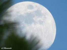 Día 14 de Adviento, Luna llena del día 13 Foto de Isidro Pestana @Tibunando
