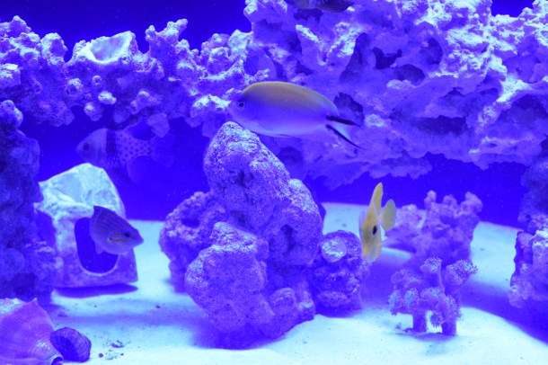 Saltwater Living Reef Aquarium by The Reef Doctor