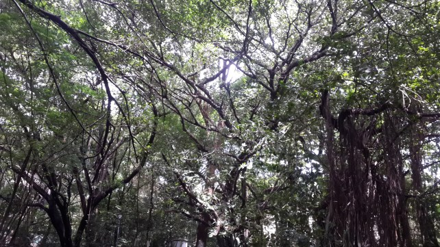 Dense tree cover near Shantaram Pond