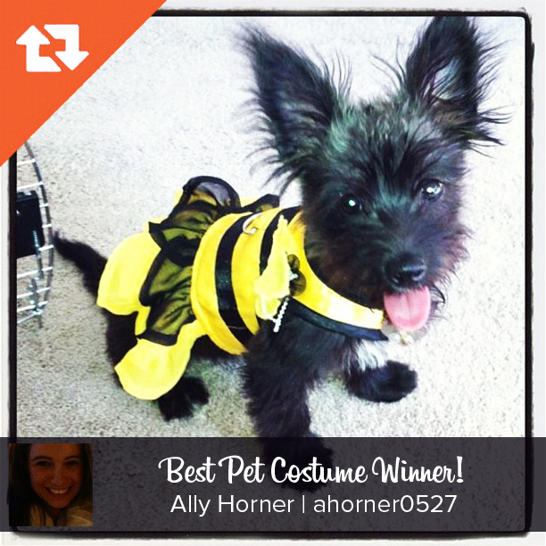 Chicago Apartments, Hallow-Gram Competition, Best Pet Costume