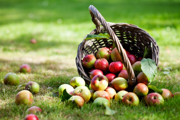 Chicago Apartments, Organic Produce, Organic Apples