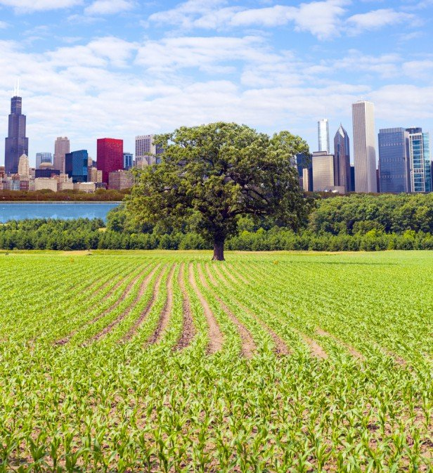 Chicago Apartments, Going Green, City Farm