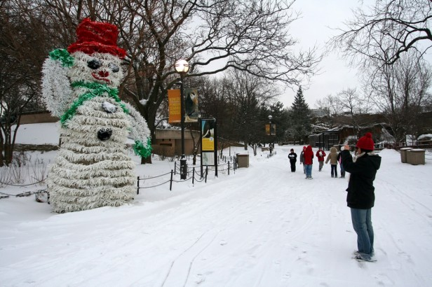 Chicago Apartments, December Events, Lincoln Park Zoo, Zoo Lights