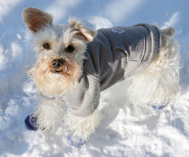 Chicago Apartments, Pet Safety, Winter Safety