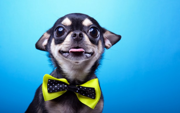 Chicago Apartments, Pet Laws