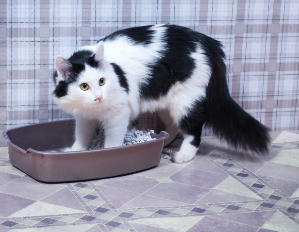 Chicago Apartments, Cat Litter Tips
