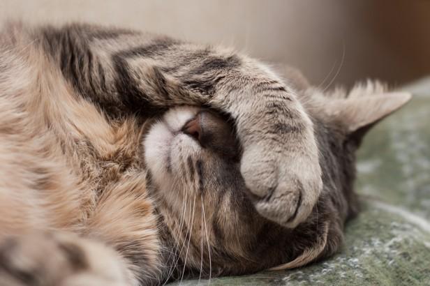 Chicago Apartments, Cat Vomit Tips