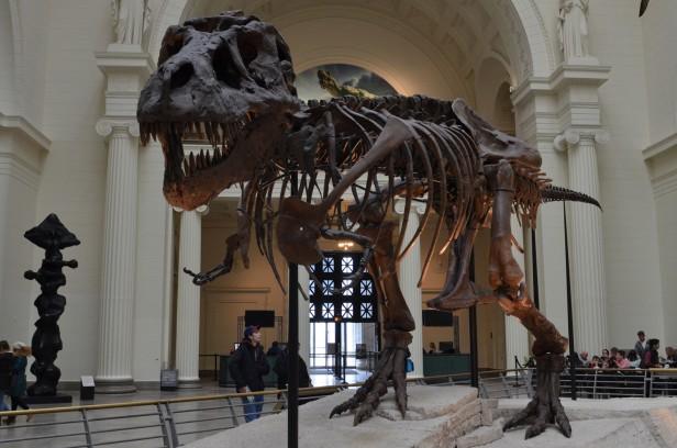 Chicago Apartments, Field Museum, Free Days, Sue the Tyrannosaurus Rex
