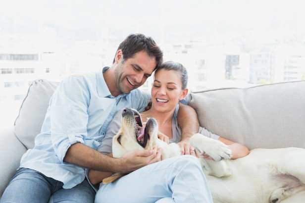 Chicago Apartments, Moving Tips, Dog Owners