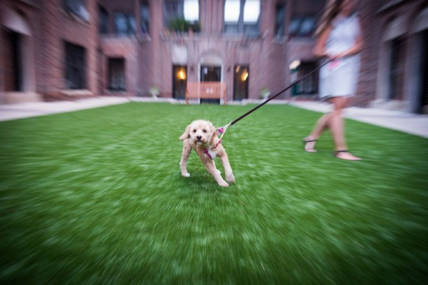Chicago Apartments, Dog Park Etiquette