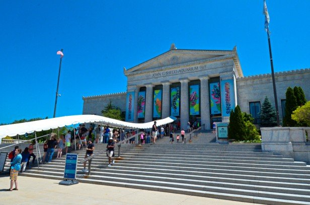 Chicago Apartments, Sightseeing, Shedd Aquarium