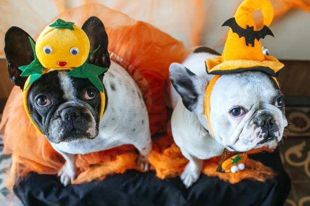 Chicago Apartments, Free Halloween Events, Spooky Pooch Parade