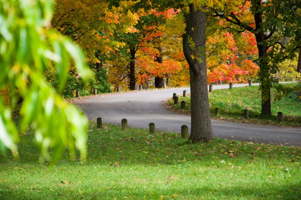 where to see fall foliage in Chicago