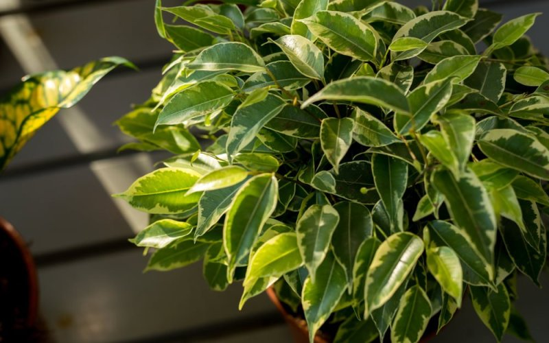 Chicago Apartments, Healthy Houseplants