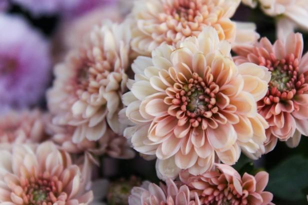 Chicago Apartments, Healthy Houseplants, Florist's Mum