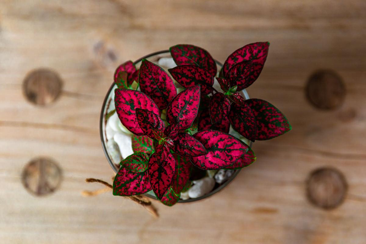 pet-friendly house plants