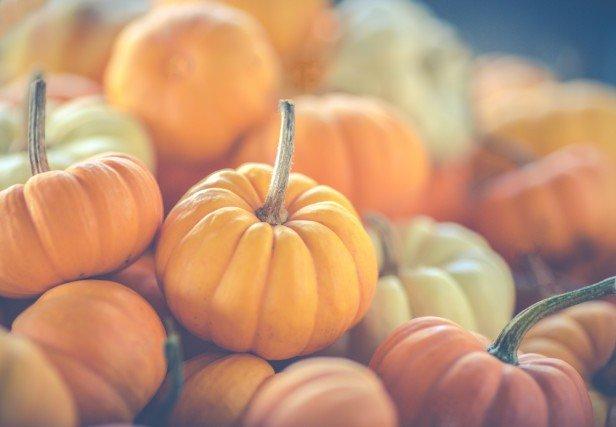 Chicago Apartments, Pumpkin Spice White Russian Recipe