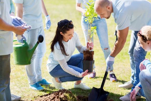 Chicago Apartments, Volunteer Opportunities, Burnham Nature Sanctuary