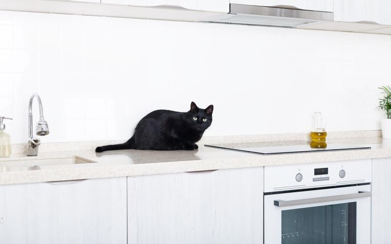 keep cats off counter