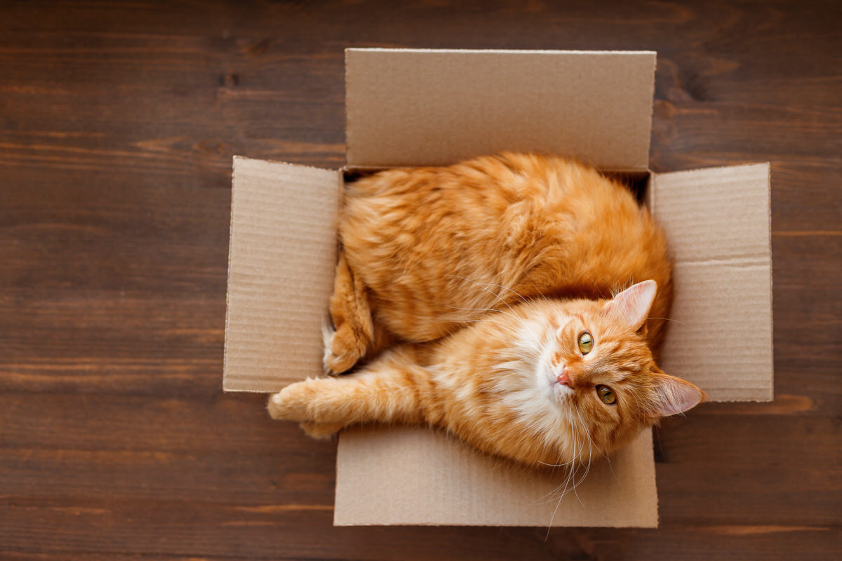 Chicago Apartments, Cat-Friendly Tips