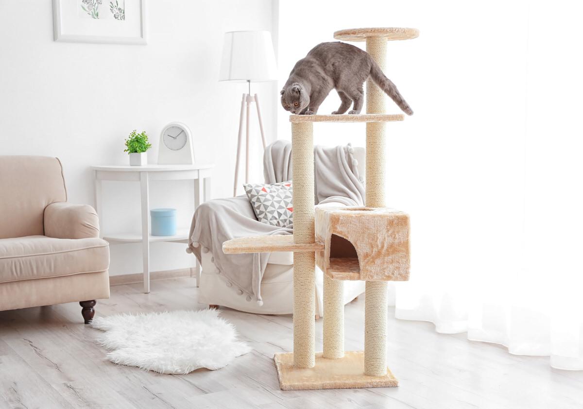 Chicago Apartments, Cat Tips