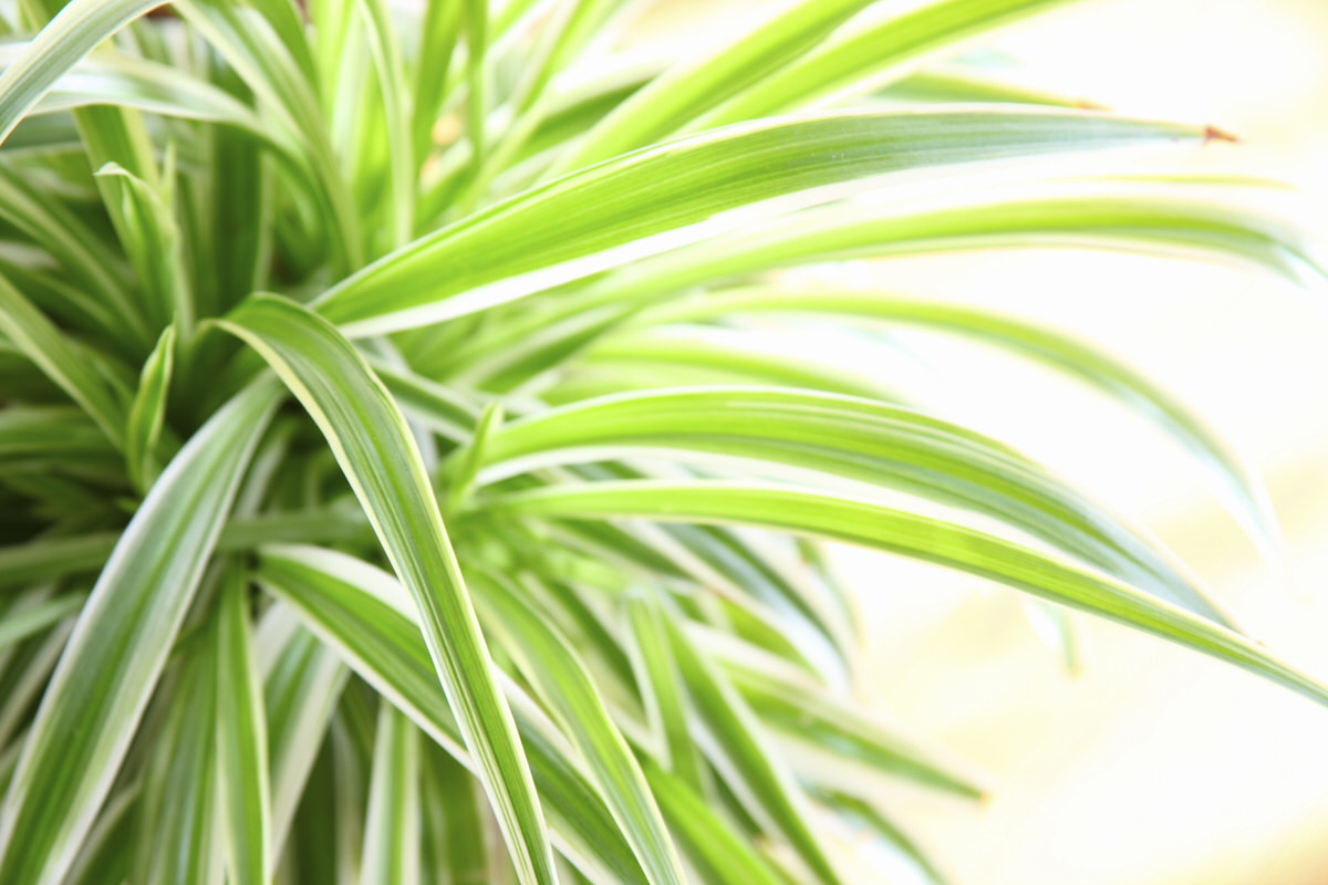 These Low-Light House Plants Are Perfect For Apartments