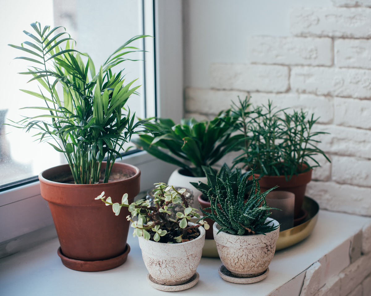 caring for house plants