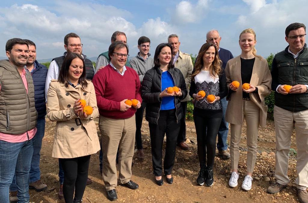 """Teresa Jiménez-Becerril: """"El PP defenderá la protección de la naranja sevillana para que no sufra la brutal bajada de precios """""""