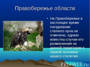 Хищные птицы Саратовской области, занесённые в Красную ...