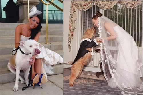 Should we care if people marry animals?