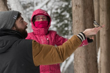 Feeding the chickadees - fun for all ages