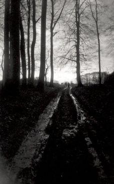 Duits bos met de Colorsplash en Earl Grey.