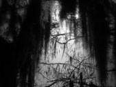 Swamps Whispers