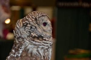 Another Owl