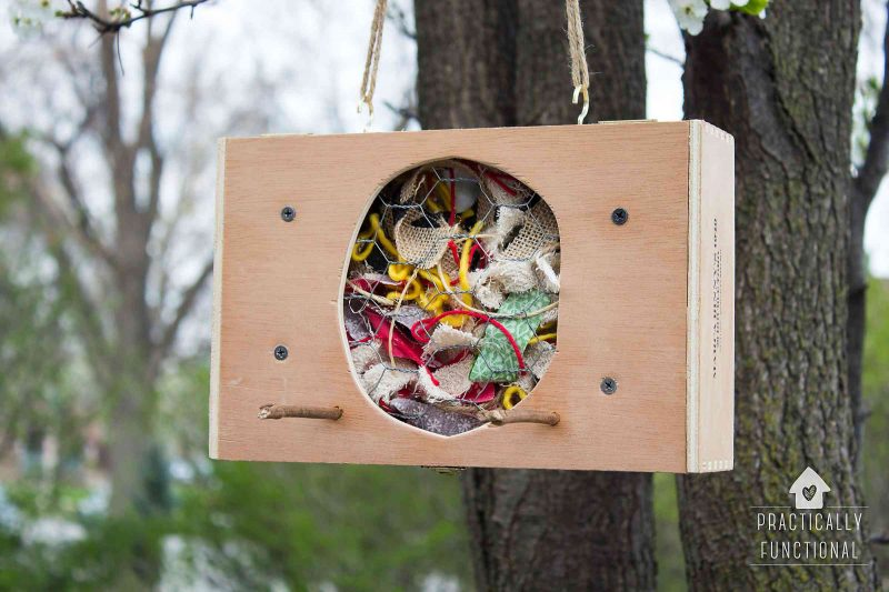 DIY Bird Nesting Material Holder From A Cigar Box